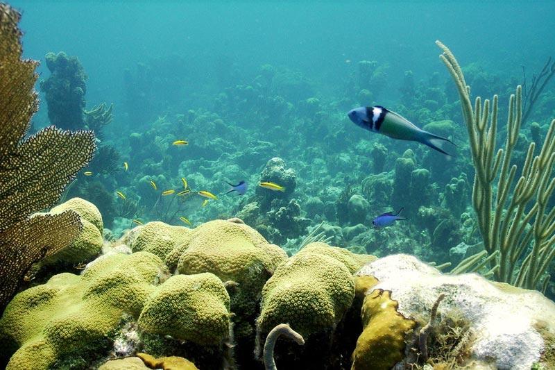 Andros-Bahamas-(2)