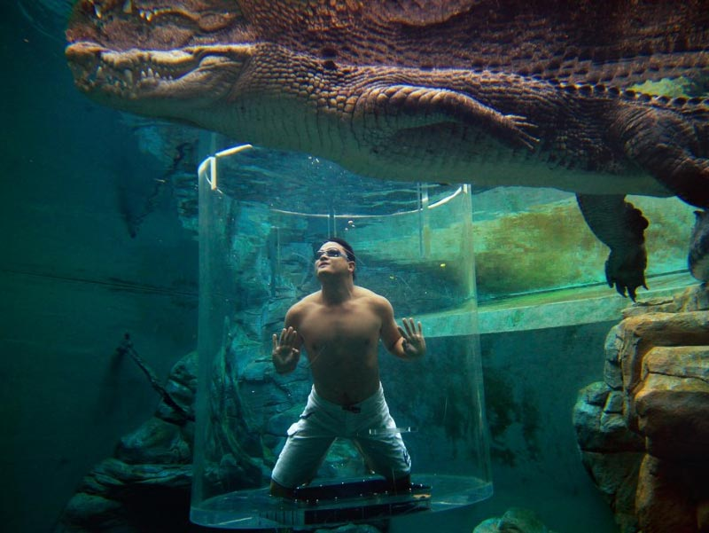 Cage-Saltwater-Crocodiles-Australia-1024x725
