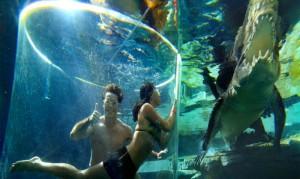 Cage-Saltwater-Crocodiles-Australia-4-1024x768