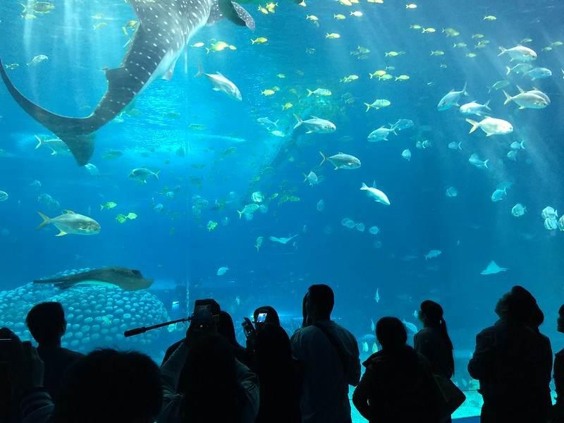 Chimelong-Ocean-Kingdom-(1)