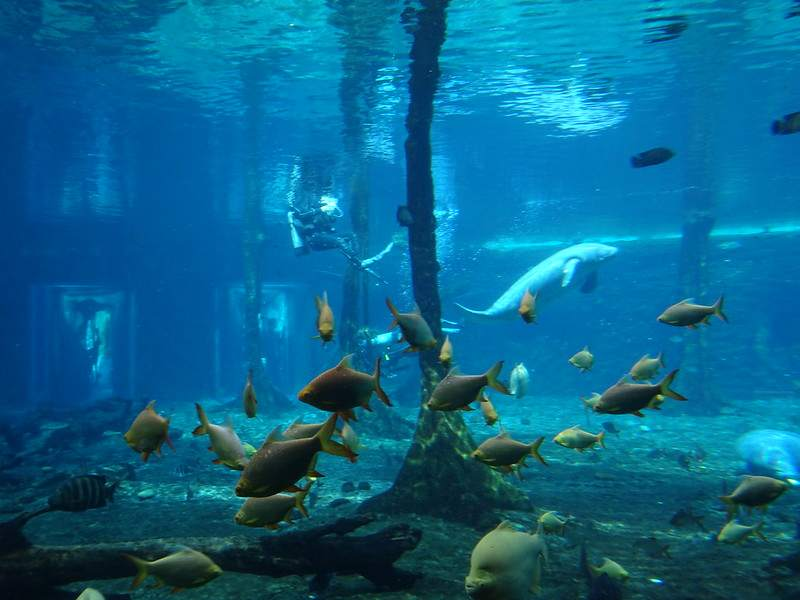 Chimelong-Ocean-Kingdom-(7)