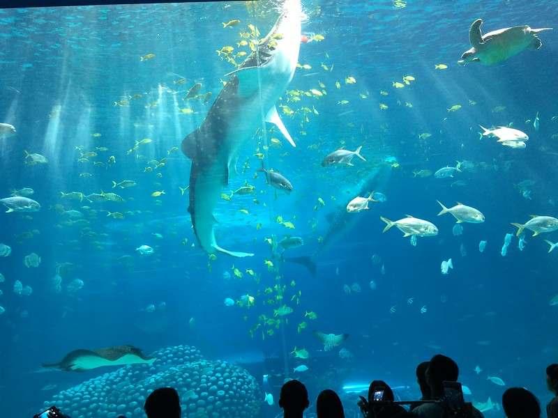 Chimelong-Ocean-Kingdom-(8)
