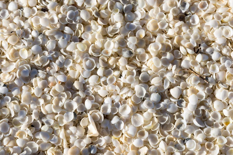 Shell-Beach-Australia-(6)