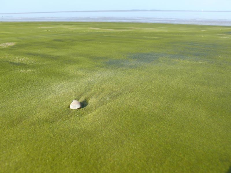 Spiaggia-verde-Kourou-(2)