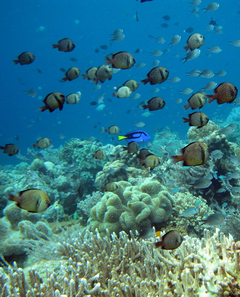 Wakatobi-Indonesia-(2)