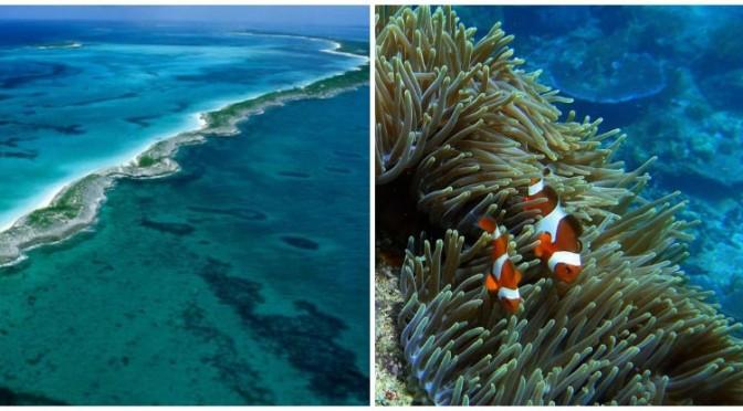 immersioni-barriera-corallina