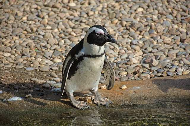 pinguini-10