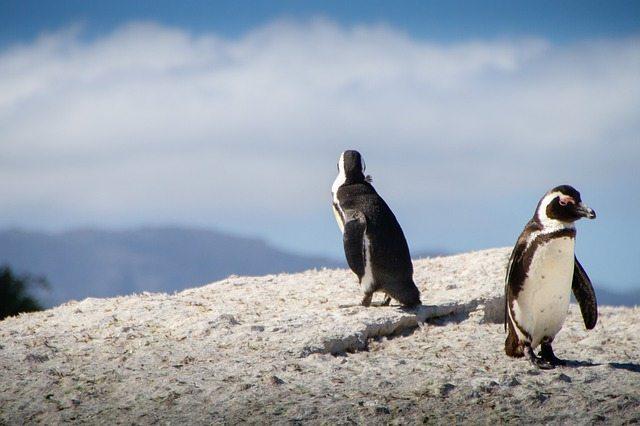 pinguini-11