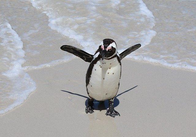 pinguini-15