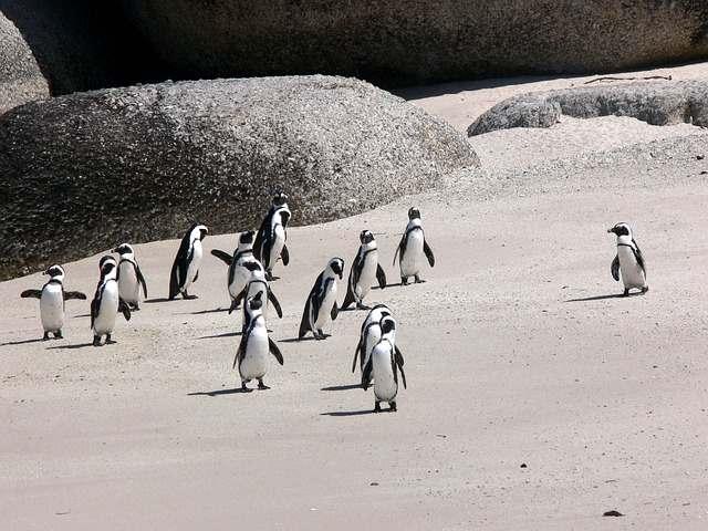 pinguini-7