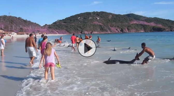 salvataggio-delfini