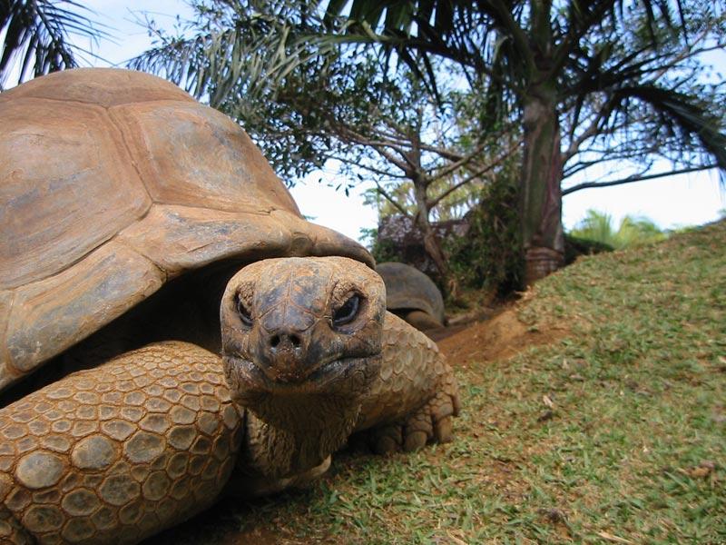 Aldabra-seychelles-(1)