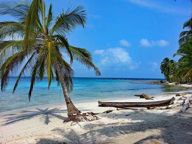 caraibi-palme