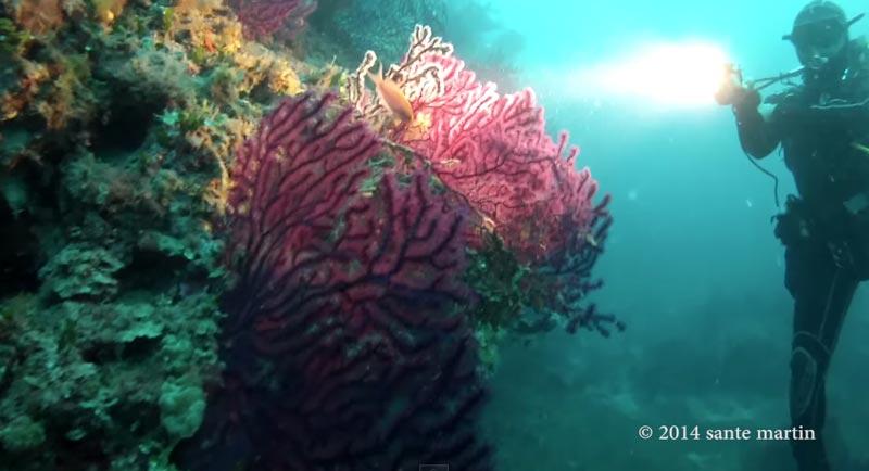 immersioni-san-vito-lo-capo (1)