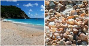 spiagge-conchiglie