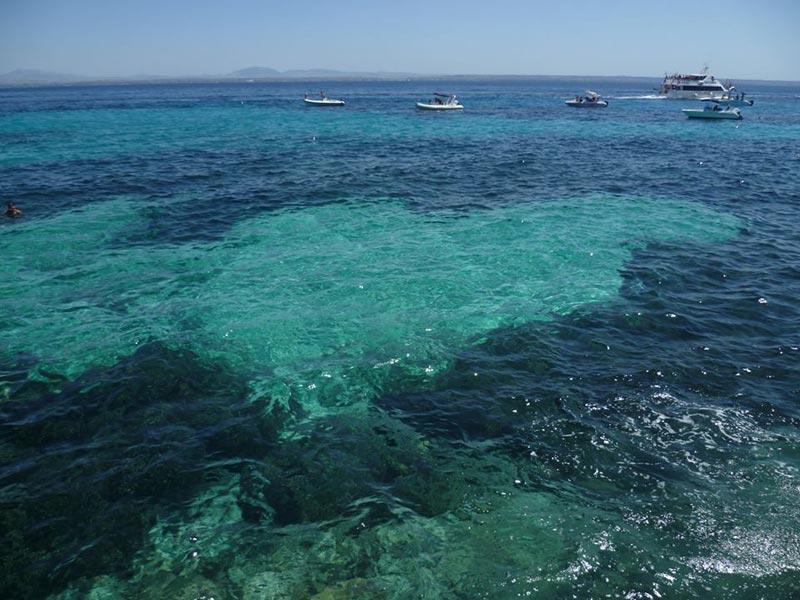 bue-marino-favignana-(2)
