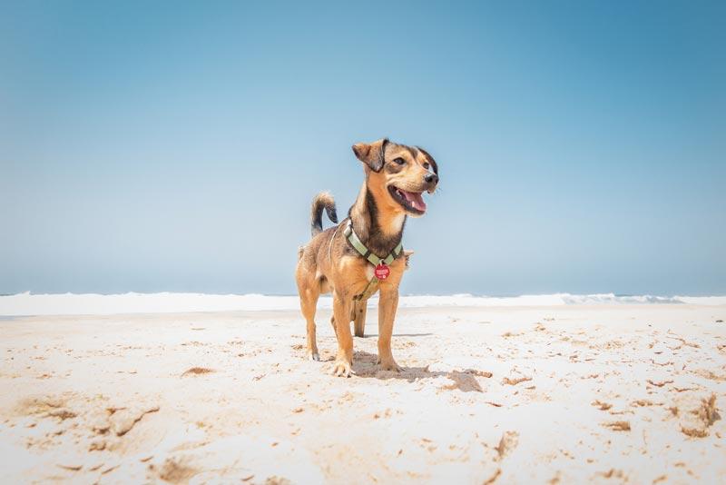 spiagge-per-cani-(2)