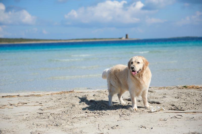 spiagge-per-cani-italia