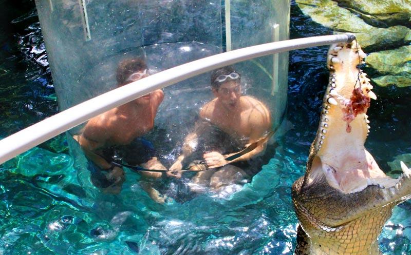 Cage-Saltwater-Crocodiles-Australia-2