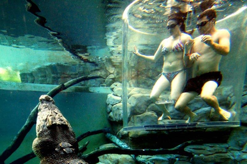 Cage-Saltwater-Crocodiles-Australia-6-768x1024