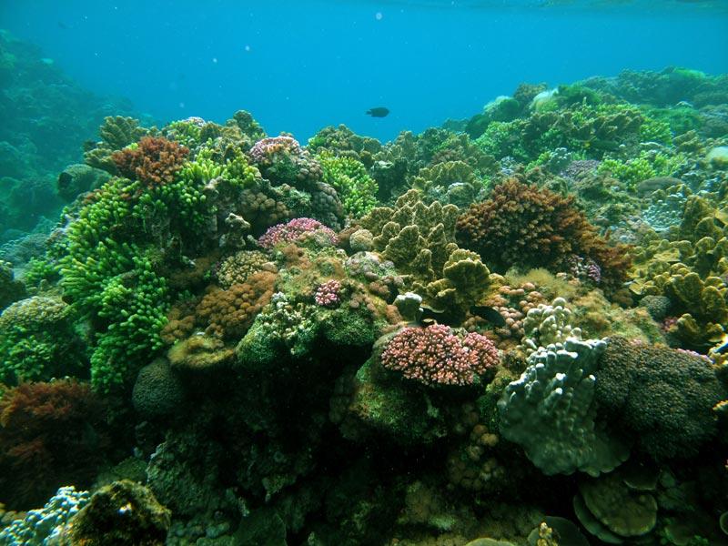 Lord-Howe-Island-(1)