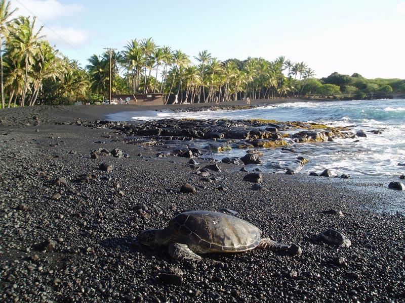 Punalu'u-Beach-(3)