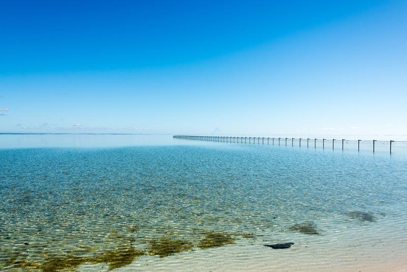 Shell-Beach-Australia-(2)