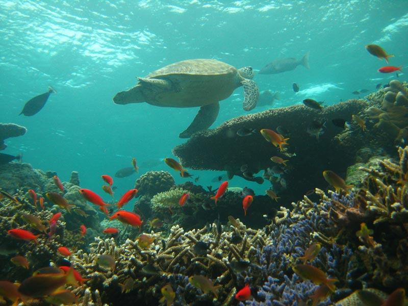 Sipadan-Island-Malesia-(2)