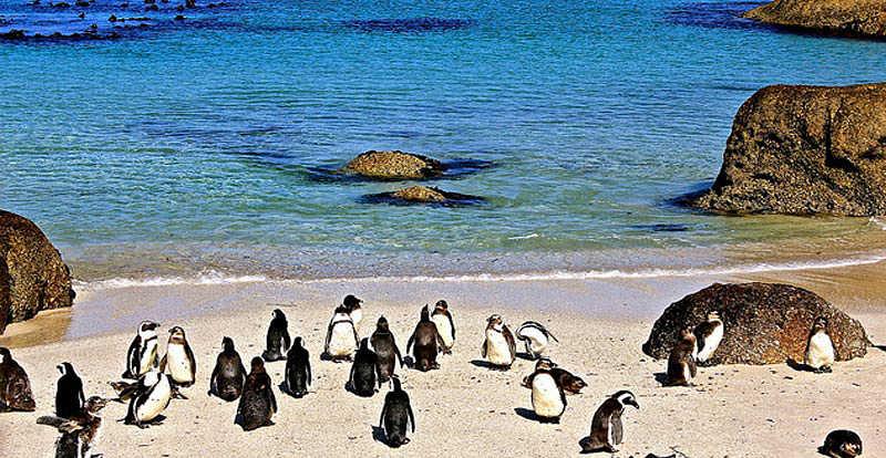 Boulders beach in sudafrica la spiaggia dove i pinguini - Pinguini di natale immagini ...