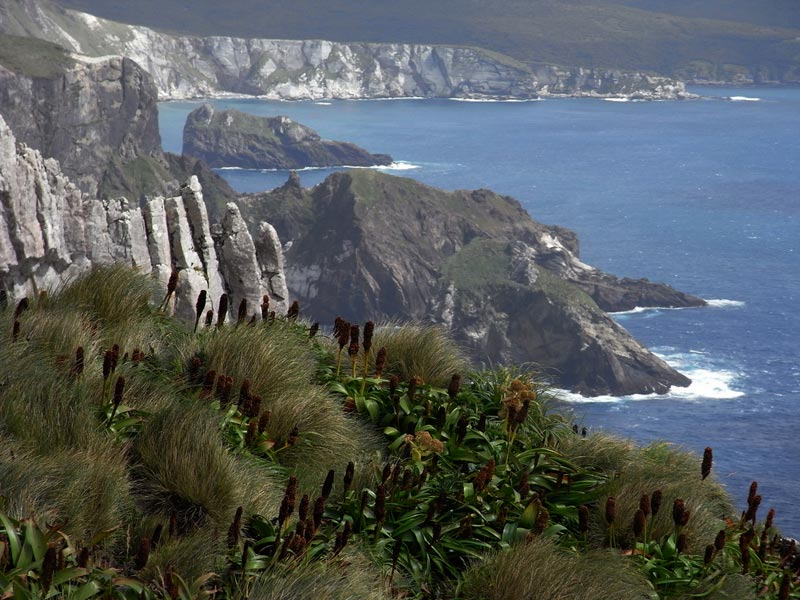 Isole-Auckland-Nuova-Zeland