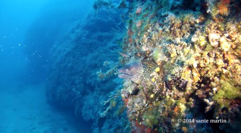 immersioni-san-vito-lo-capo (3)