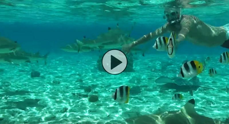 nuotare con gli squali… si può a bora bora! | weplaya