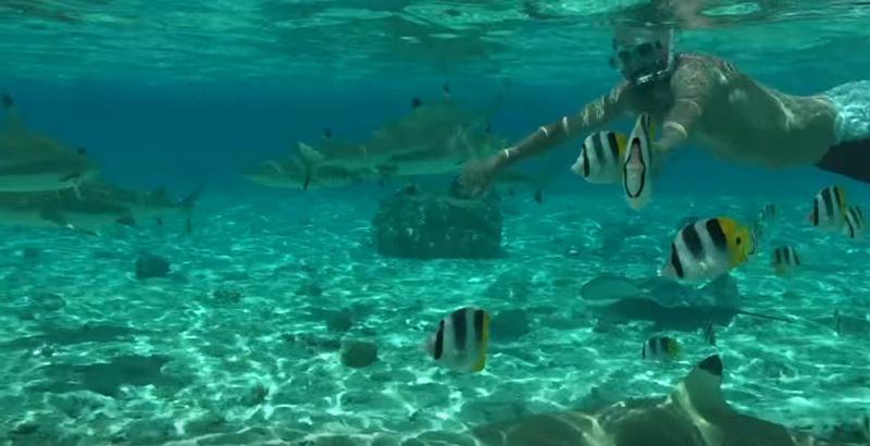 squali-bora-bora-2