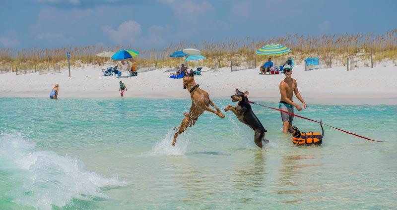 spiagge-per-cani-(3)