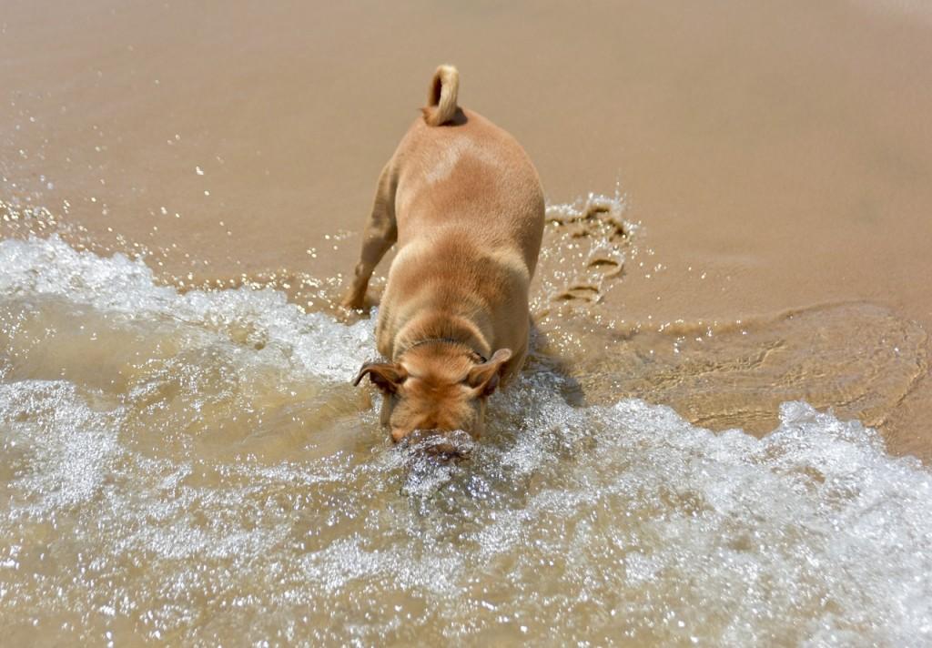 Spiagge per cani Toscana